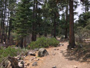 ガリーナ公園で里山散策 ① Jones Creek Loop Trail at Galena Creek Reginal Park